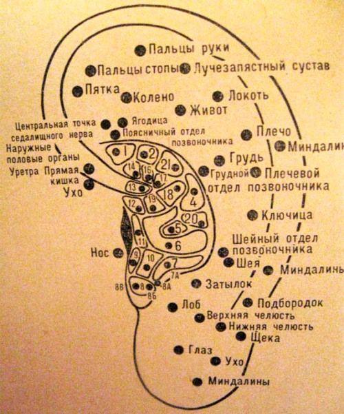 массаж ушей (ушных раковин) и активные точки на ухе