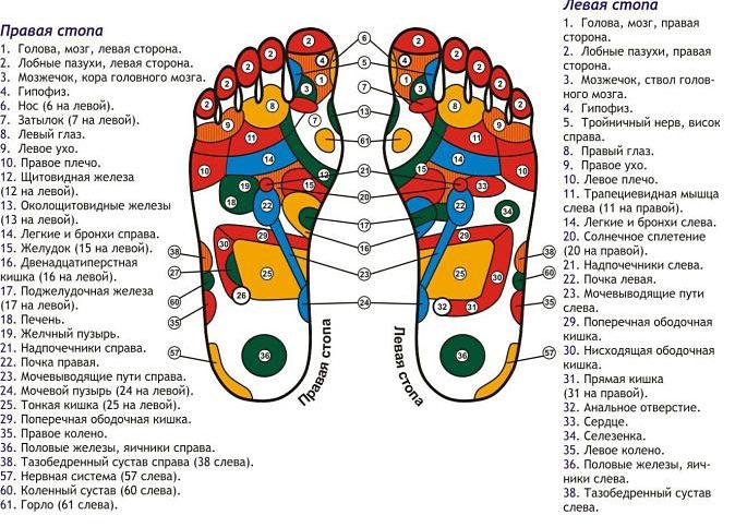 таблица проекций органов на стопе
