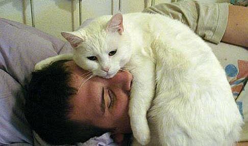 доктор кот, какие болезни лечат кошки
