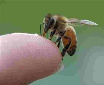 пчелоужаливание, лечение укусами пчел