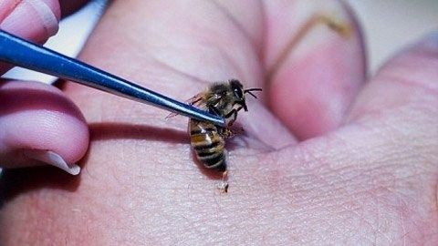 Схема пчелоужаливанием