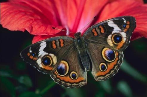 бабочка и другие порхающие - как выбор к психологическому тесту сад