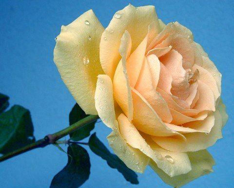 цветок - как выбор к психологическому тесту сад
