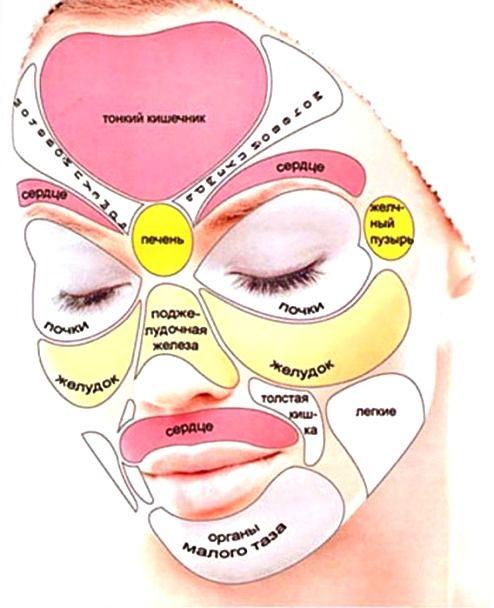 схема на лице проекций органов