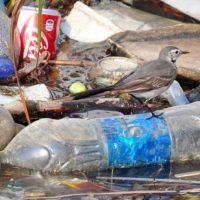 Куда нас могут завести пластиковые тарелки — вред пластика для человека и окружающей среды