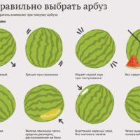 Арбуз: польза и вред для здоровья, чистка арбузами, как выбирать