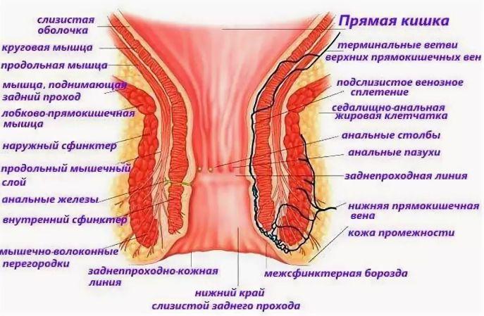 Анальный полип симтомы