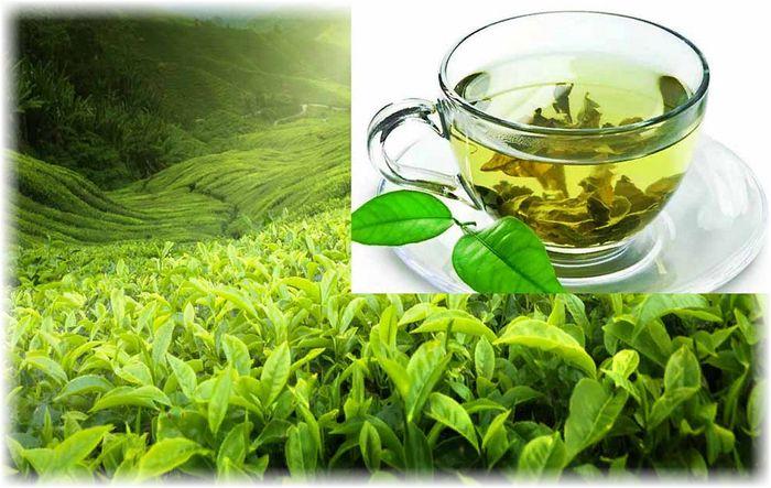 вред зеленого чая для здоровья