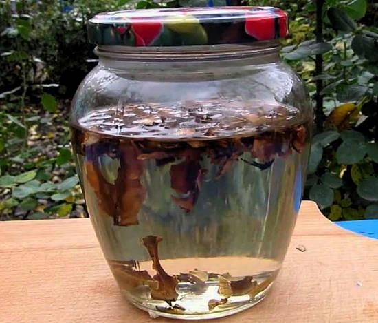 настойка перегородок грецкого ореха на водке применение