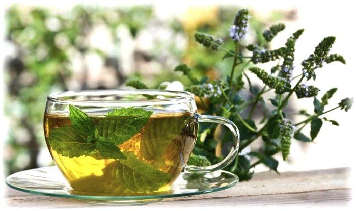 чай с мятой - польза и вред для здоровья