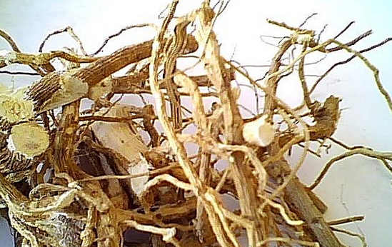 Алтей: приготовление сиропа, отвара и настоя из корней алтея