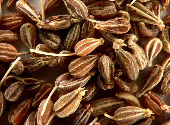 семена аниса, полезные свойства