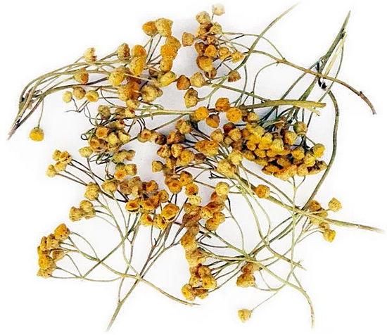 сухие цветки пижмы - польза