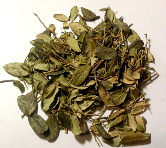листья брусники при цистите - польза и лечение