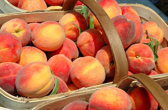 полезные свойства персиков и противопоказания