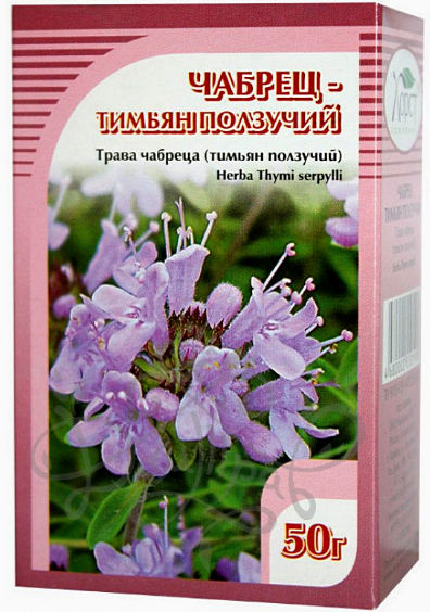Чабрец (тимьян) - лечебные свойства и противопоказания