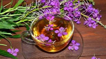 Иван-чай: полезные свойства и противопоказания, применение в рецептах