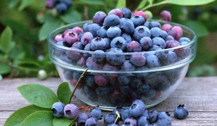 Ирга — полезные свойства и противопоказания ягоды, применение