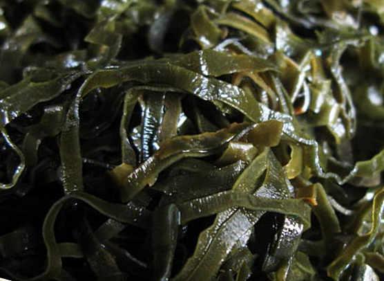 польза и вред морской капусты (ламинарии)