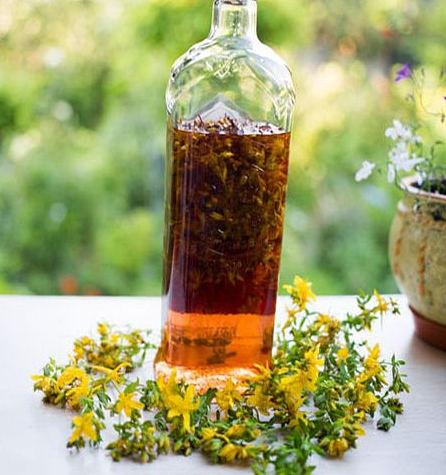 лечение зверобоем и противопоказания травы