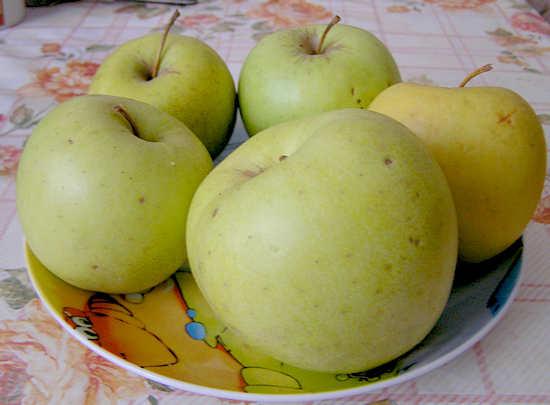 Яблочная диета для похудения - плюсы и минусы