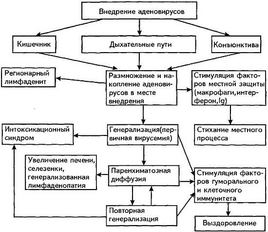 аденовирусная инфекция процесс