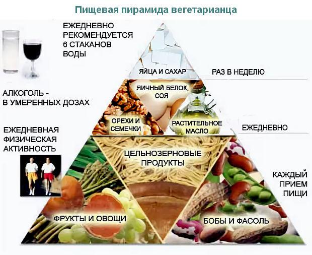 пищевая пирамида вегетарианца