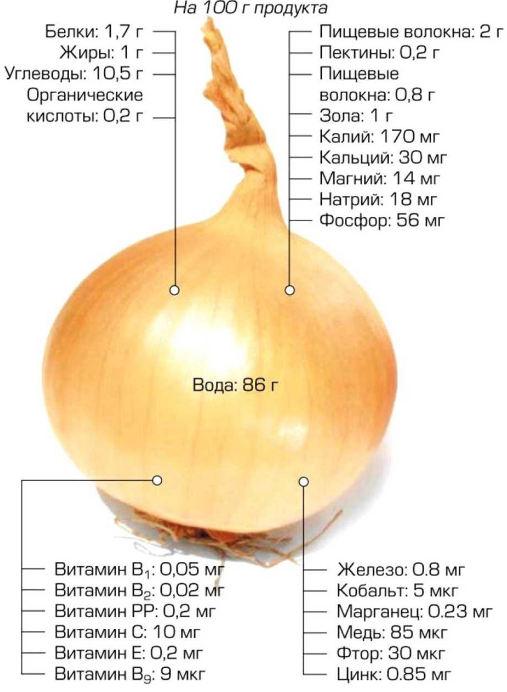 Репчатый лук полезные свойства и противопоказания