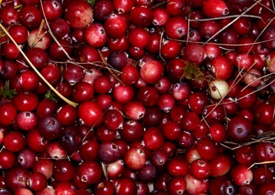 Клюква: полезные свойства и противопоказания ягоды