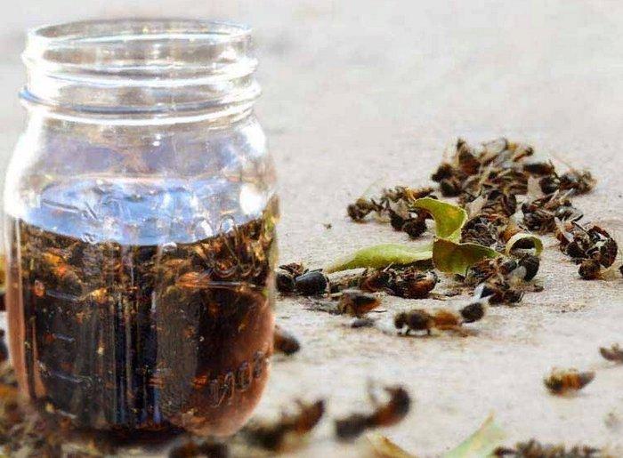 настойка пчелиного подмора - лечение
