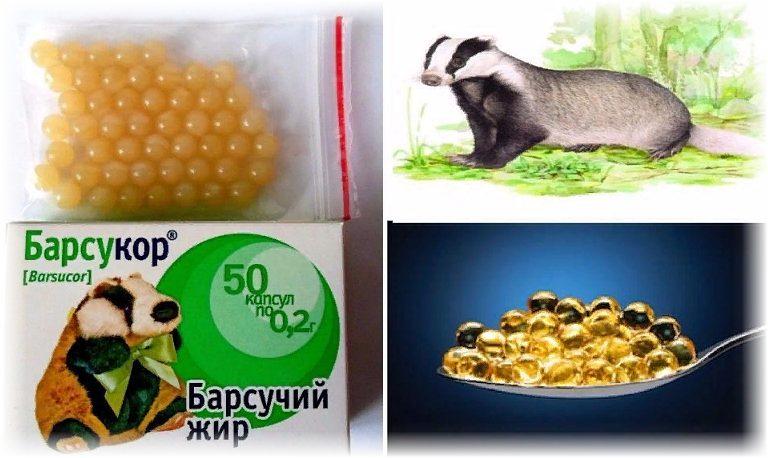 барсучий жир - лечебные свойства