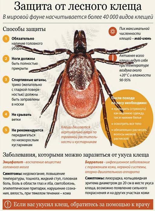 инкубационный период паразитов в человеке