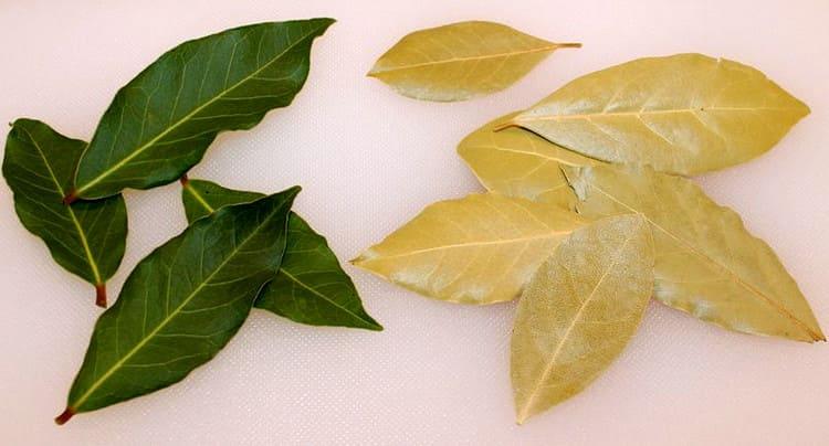 свежие и сушеные лавровые листья - польза