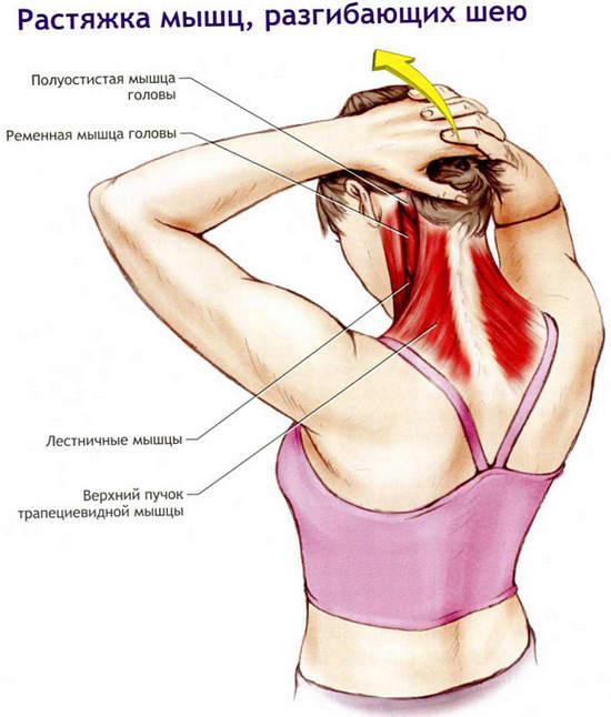 упражнения для растяжки шеи при миозите