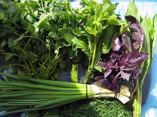 зелень: полезные свойства и как ее хранить максимально полезно