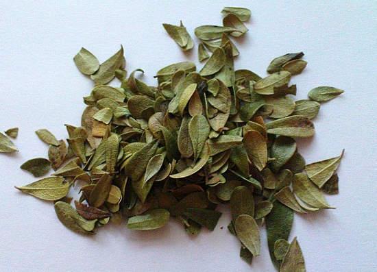сушенные листья толокнянки