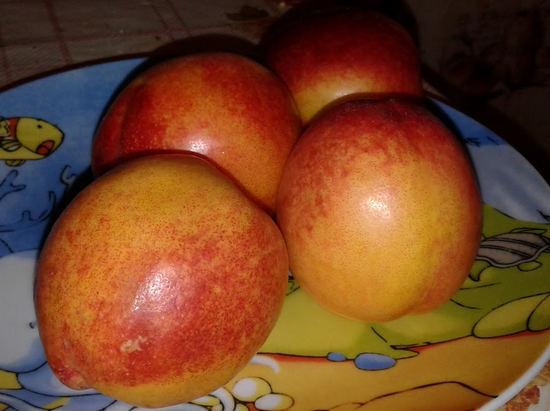 Нектарины – польза или вред фруктов