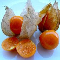 Физалис — полезные свойства и противопоказания ягоды