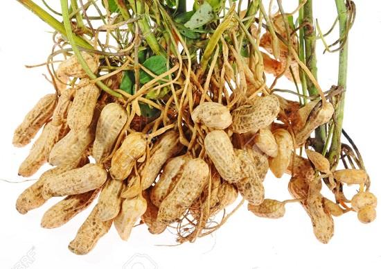 вред арахиса и польза земляного ореха