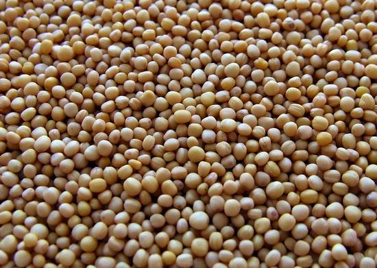 горчицы семена польза