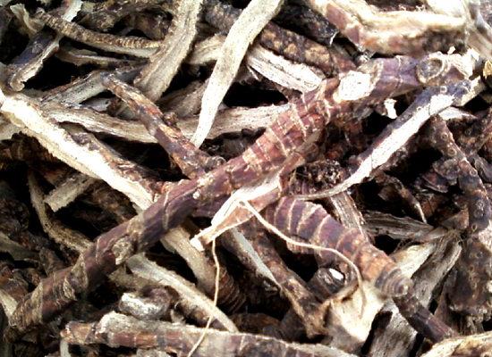 польза корня аира и вред для организма