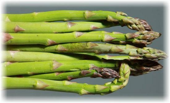 спаржа польза и вред овоща