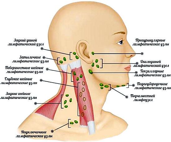 классификация лимфоузлов на шее