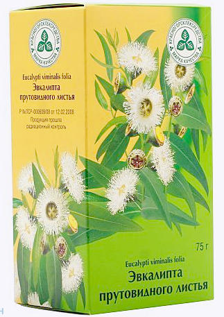 Эвкалипт - лечебные свойства и противопоказания, применение масла