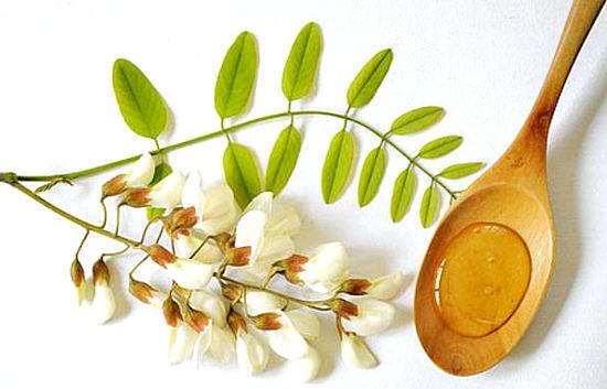 Цветы акации - лечебные свойства и противопоказания, мед