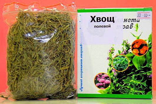 хвощ полевой - применение и лечебные свойства