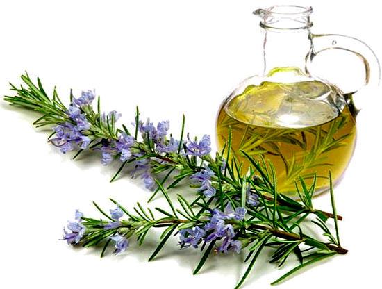 масло розмарина полезные свойства