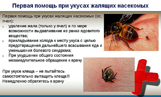 первая помощь при укусах жалящих насекомых