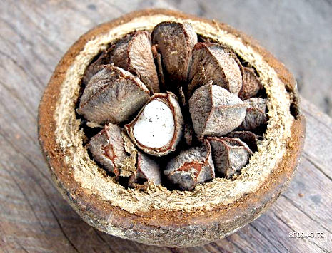 польза бразильского ореха для здоровья