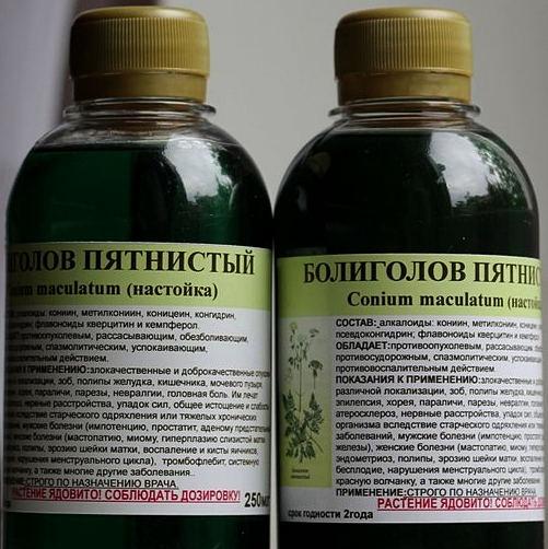 Болиголов – лечебные свойства и противопоказания травы